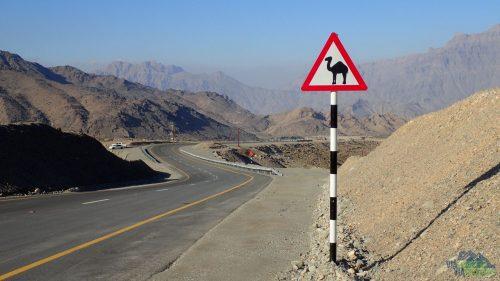 Cestou si musíte dívat pozor na velbloudy