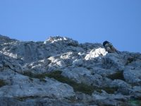 Gamsblick - Klettersteig