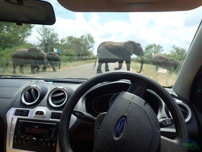Pozor sloni!