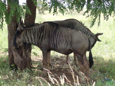 Krugerův národní park