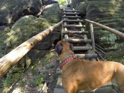 První schody začínají jen kousek od startu ocelových lan.